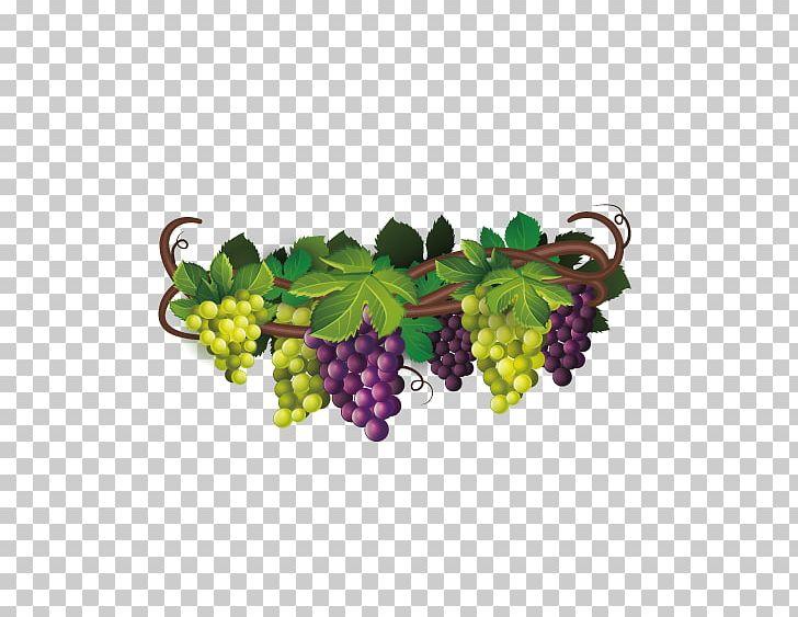 Wine common grape the. Grapevine clipart blackberry vine