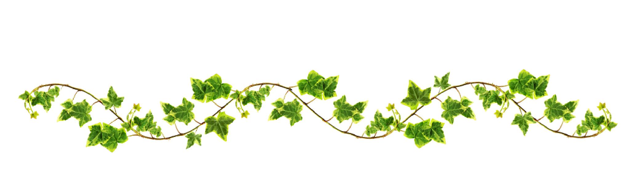 Flower vines png. Devotional
