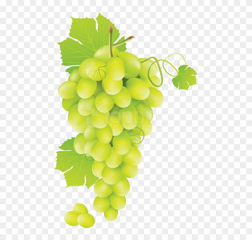 Grapevine clipart grape garden. Free png download green