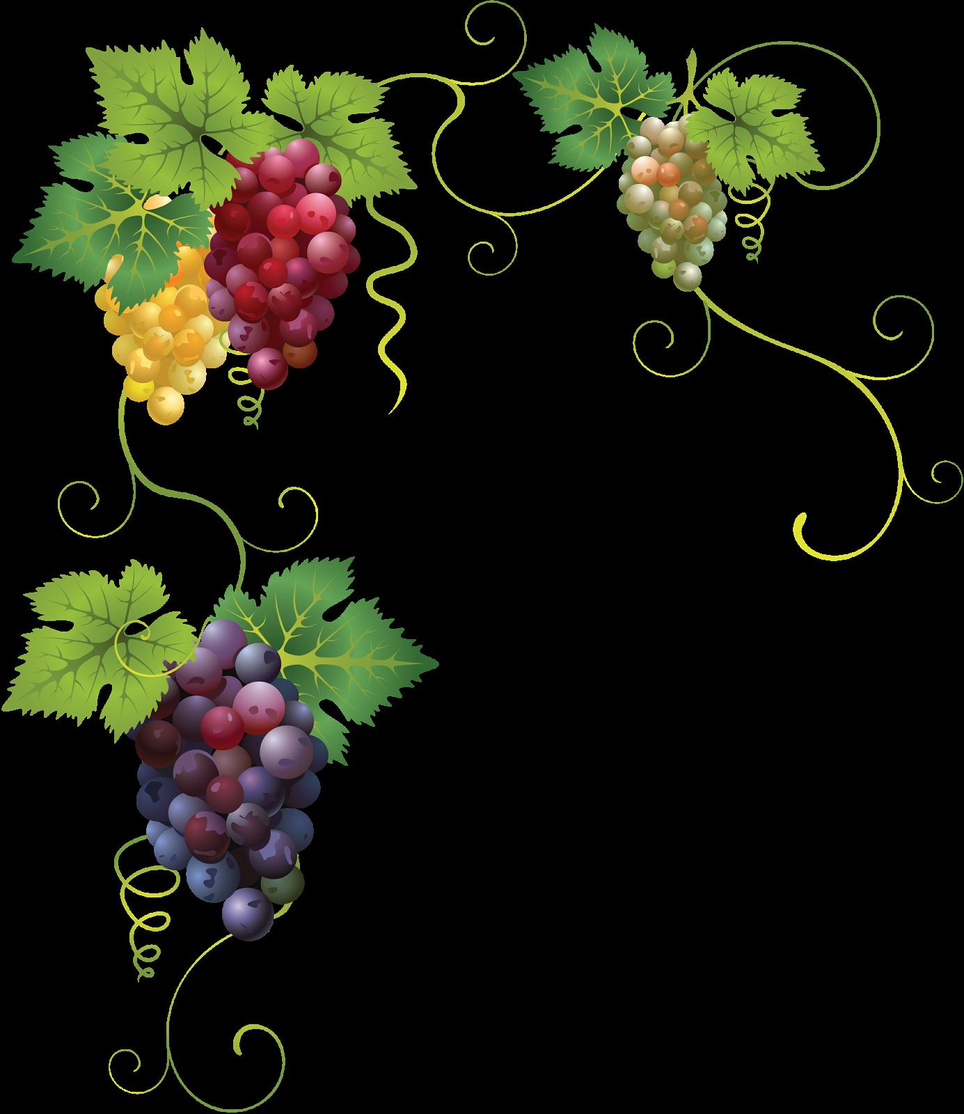 Grapevine clipart pattern. Transparent background grape
