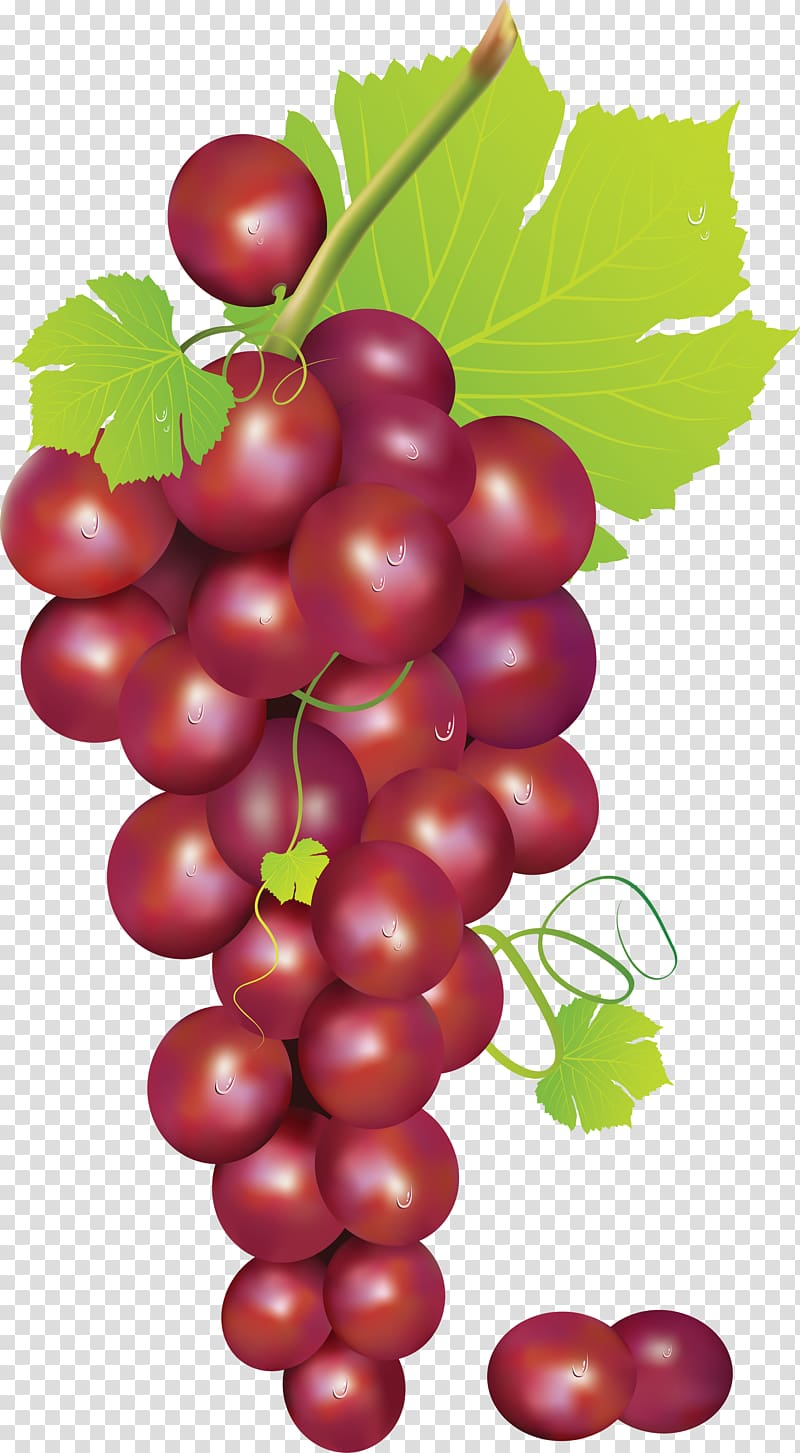 Grapevine clipart red grape. Transparent background png hiclipart