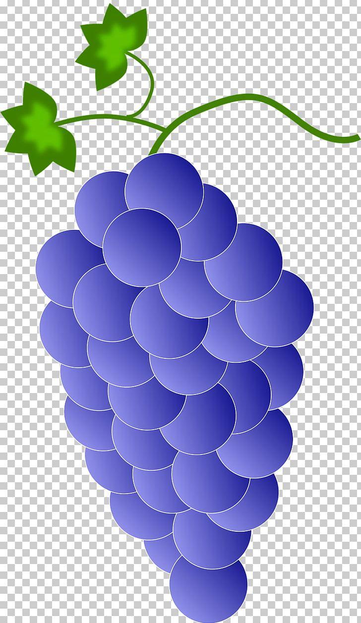 Grapevine clipart red grape. Wine common vine png