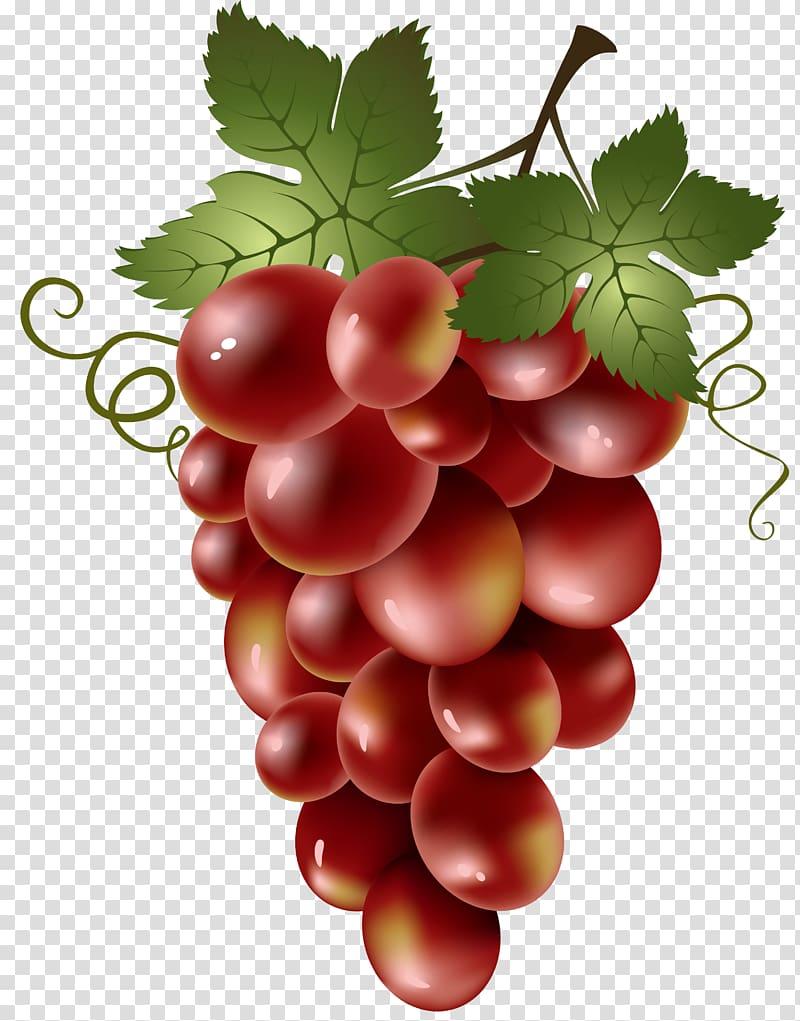 Wine common vine a. Grapevine clipart red grape
