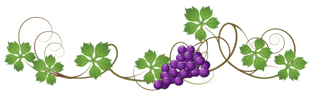 South africa s cape. Grapevine clipart wine tasting