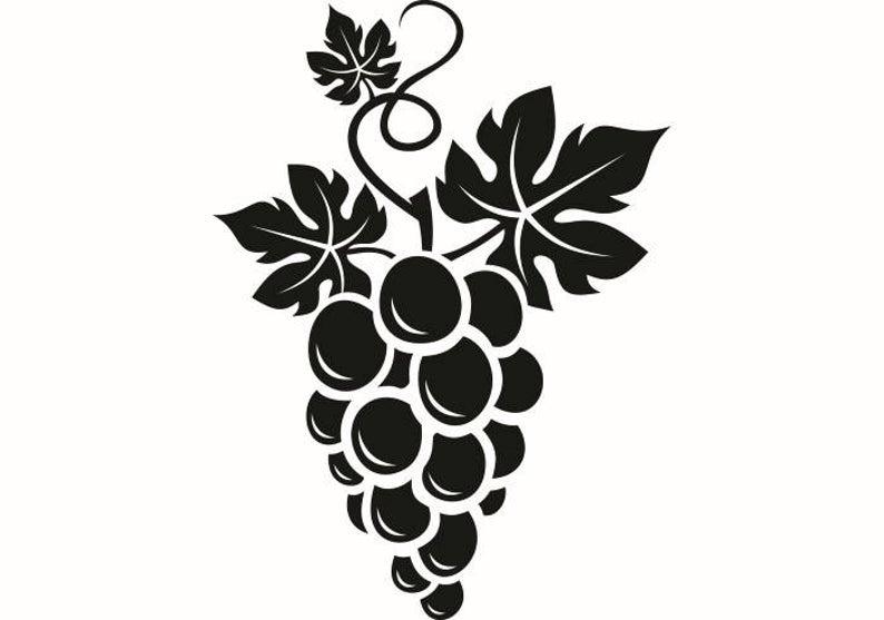 Grape vine wine vineyard. Grapevine clipart winery