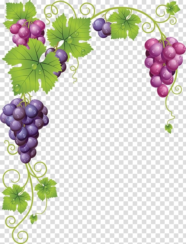 Pink and purple grapes. Grapevine clipart winery