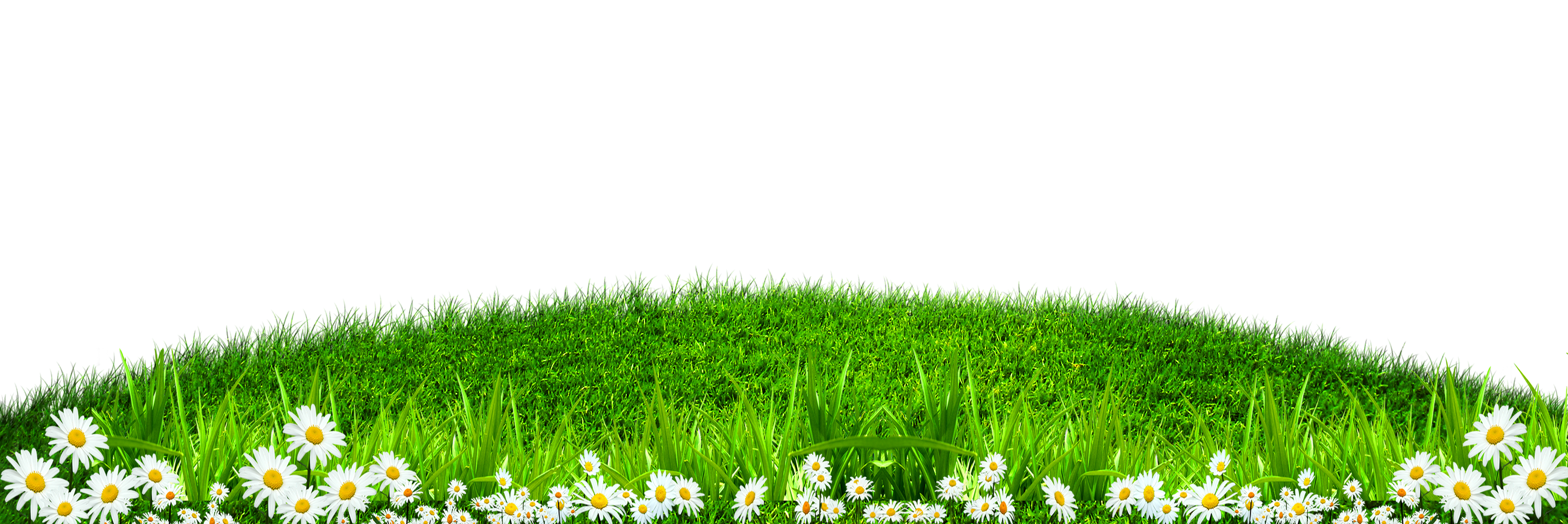 Grass border png. Wallpaper green white texture