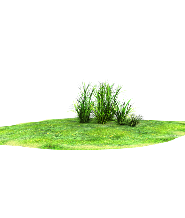 Wonderful grass land accent. Plant clipart terrestrial plant
