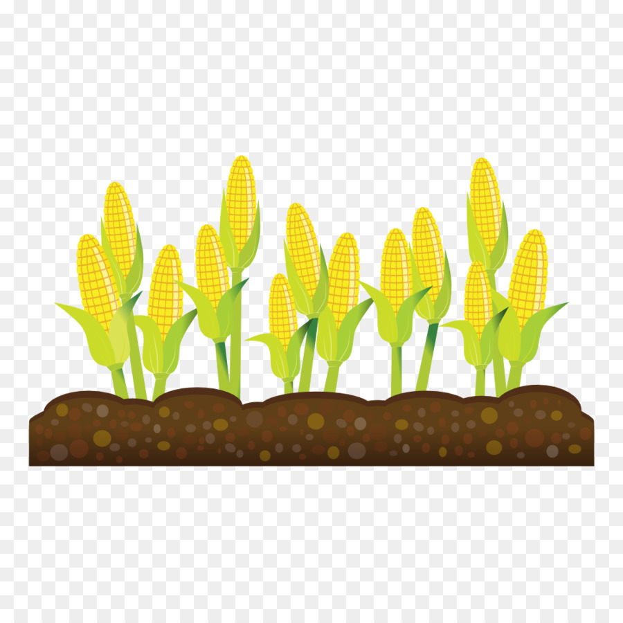 Grass clipart crop. Background agriculture farm yellow