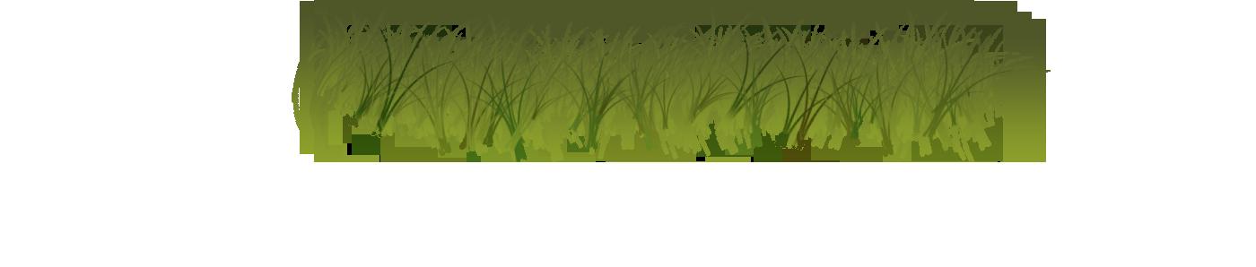 Grass forest grass
