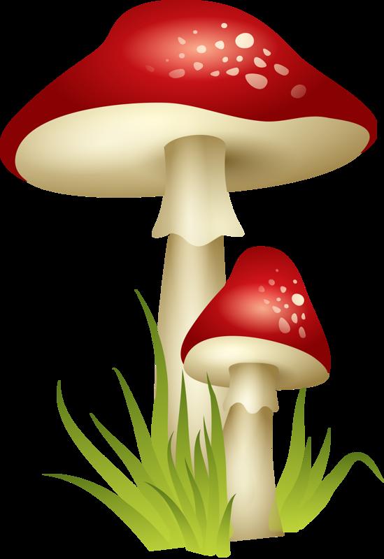 png pinterest clip. Mushrooms clipart fairy mushroom