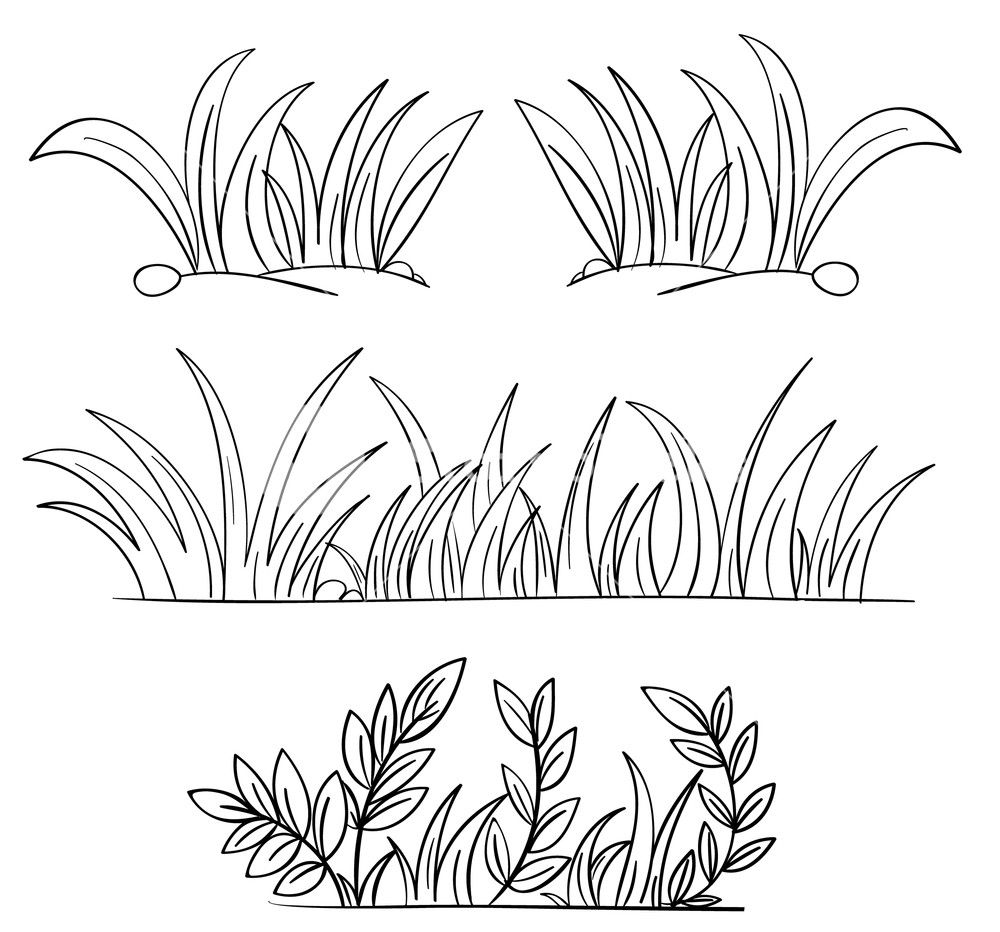 Grass clipart outline. Illustration of and plant