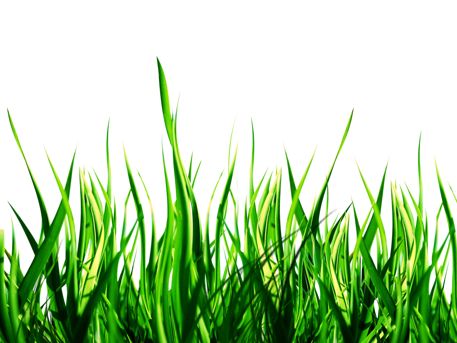 Grass clipart outline. High re cover png