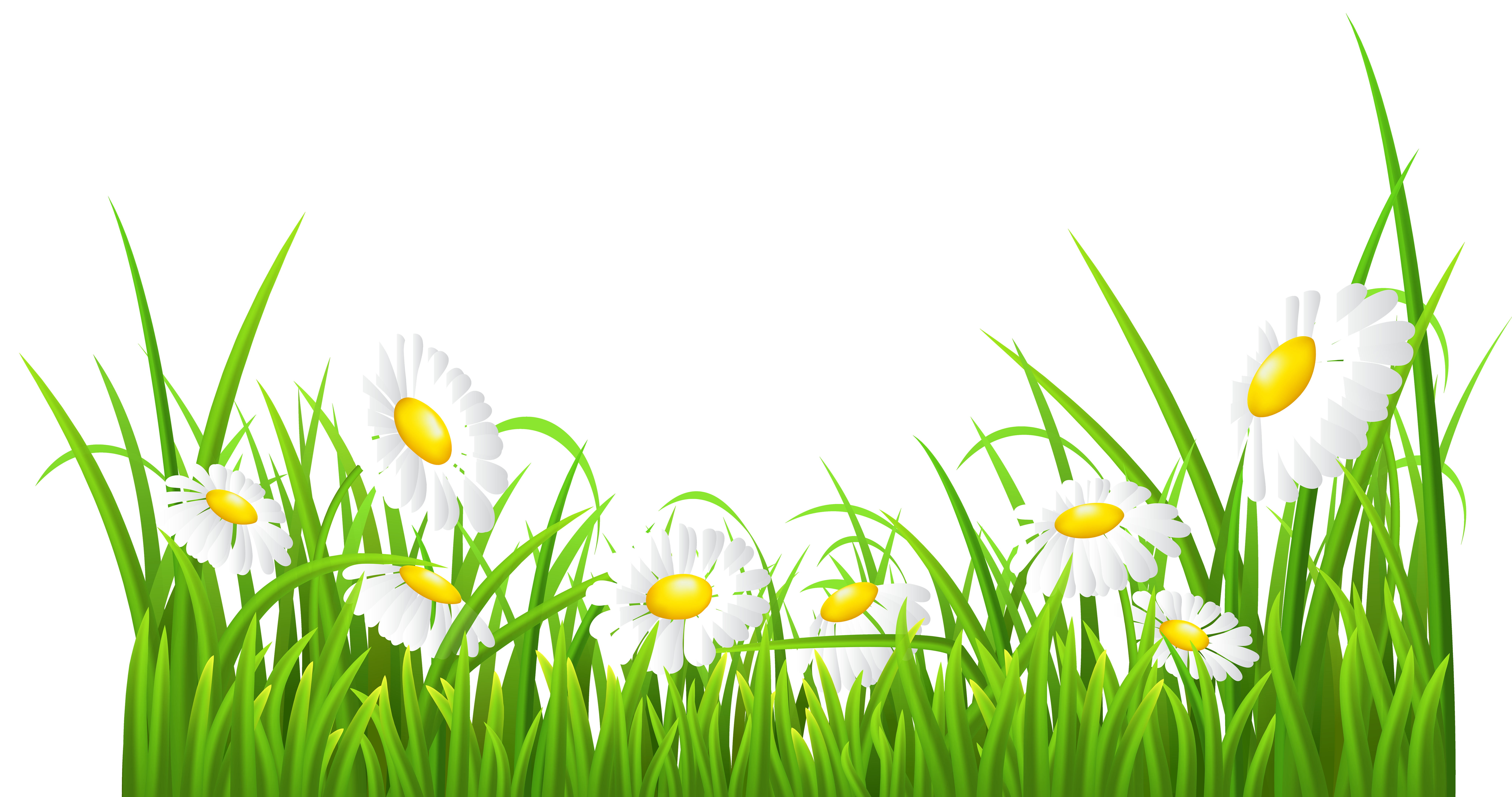 Grass clipart spring. Daisy for free and