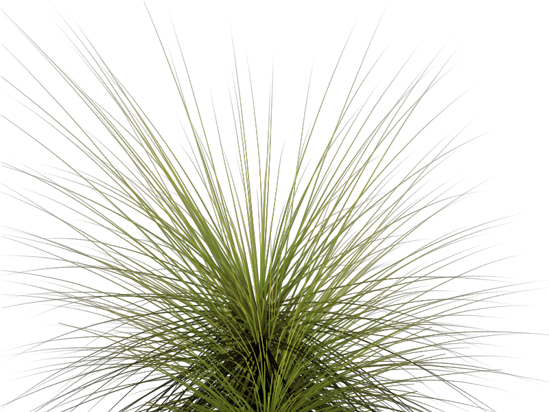 Tall clipart tall tall tall tree. Grass transparent png pictures