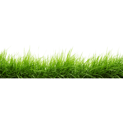 Grass png images. Line of transparent stickpng