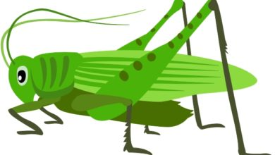 At getdrawings com free. Grasshopper clipart
