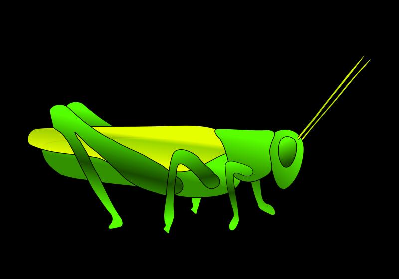 Grasshopper animal hop
