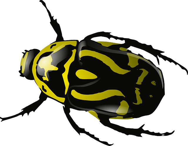Purple clipart insect. Free image on pixabay