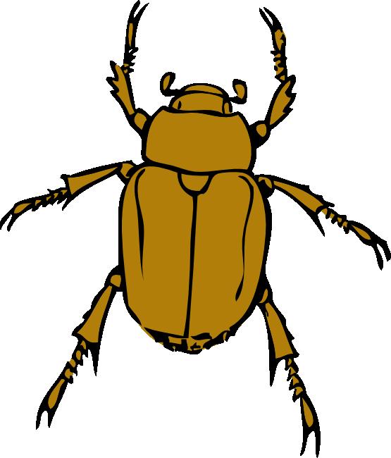 Bugs transparent background frames. Beetle clipart