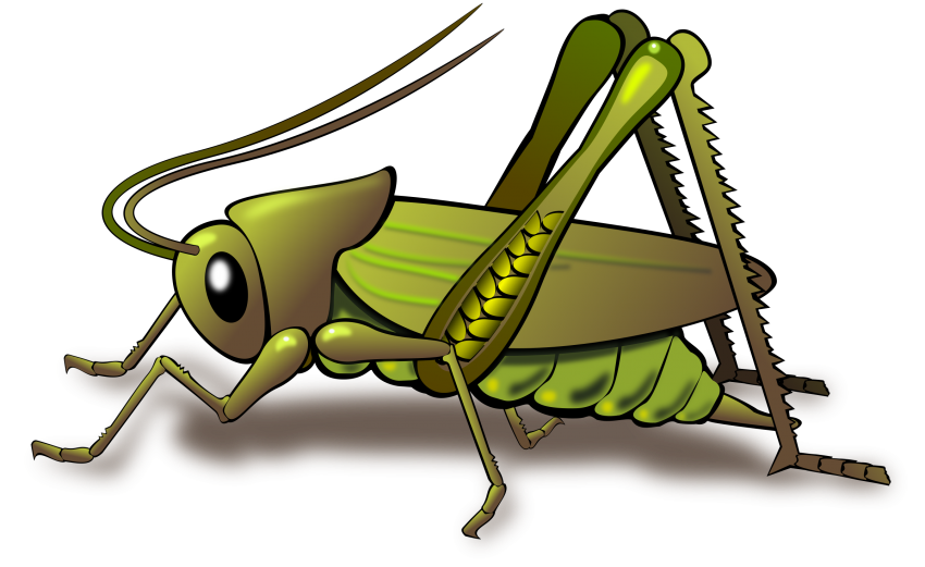 Insects clipart water. Cricket insect png transparent