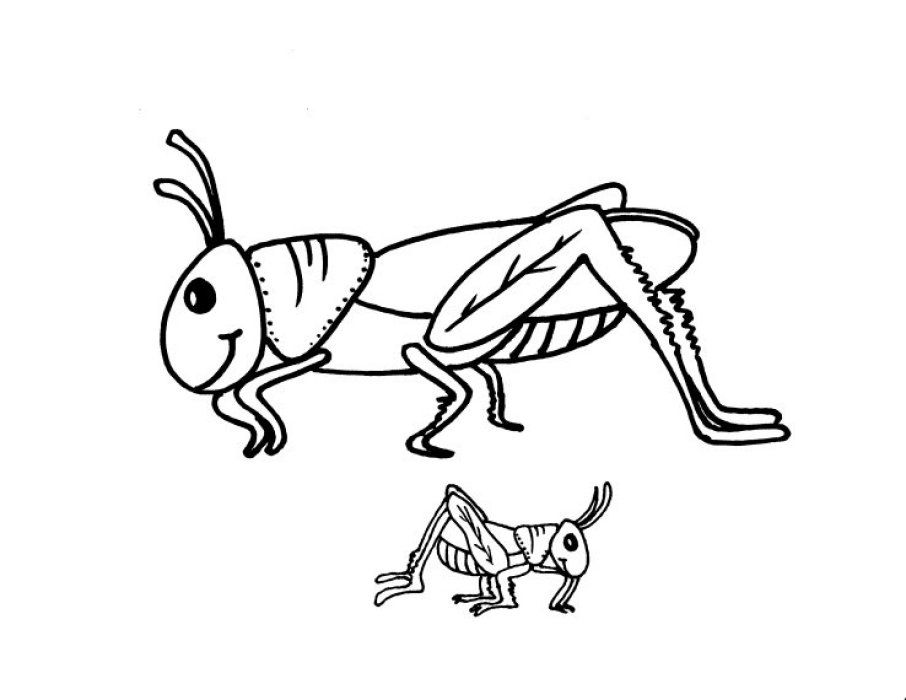 Free the ant and. Grasshopper clipart color