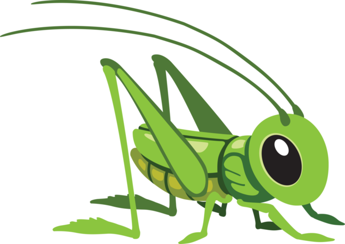 x kb pillang. Insect clipart insect grasshopper