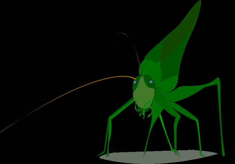 Insects clipart katydid. Free grasshopper emeza animal