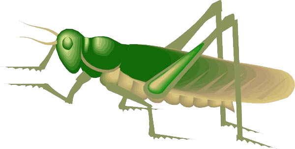 Png images free download. Grasshopper clipart insect grasshopper
