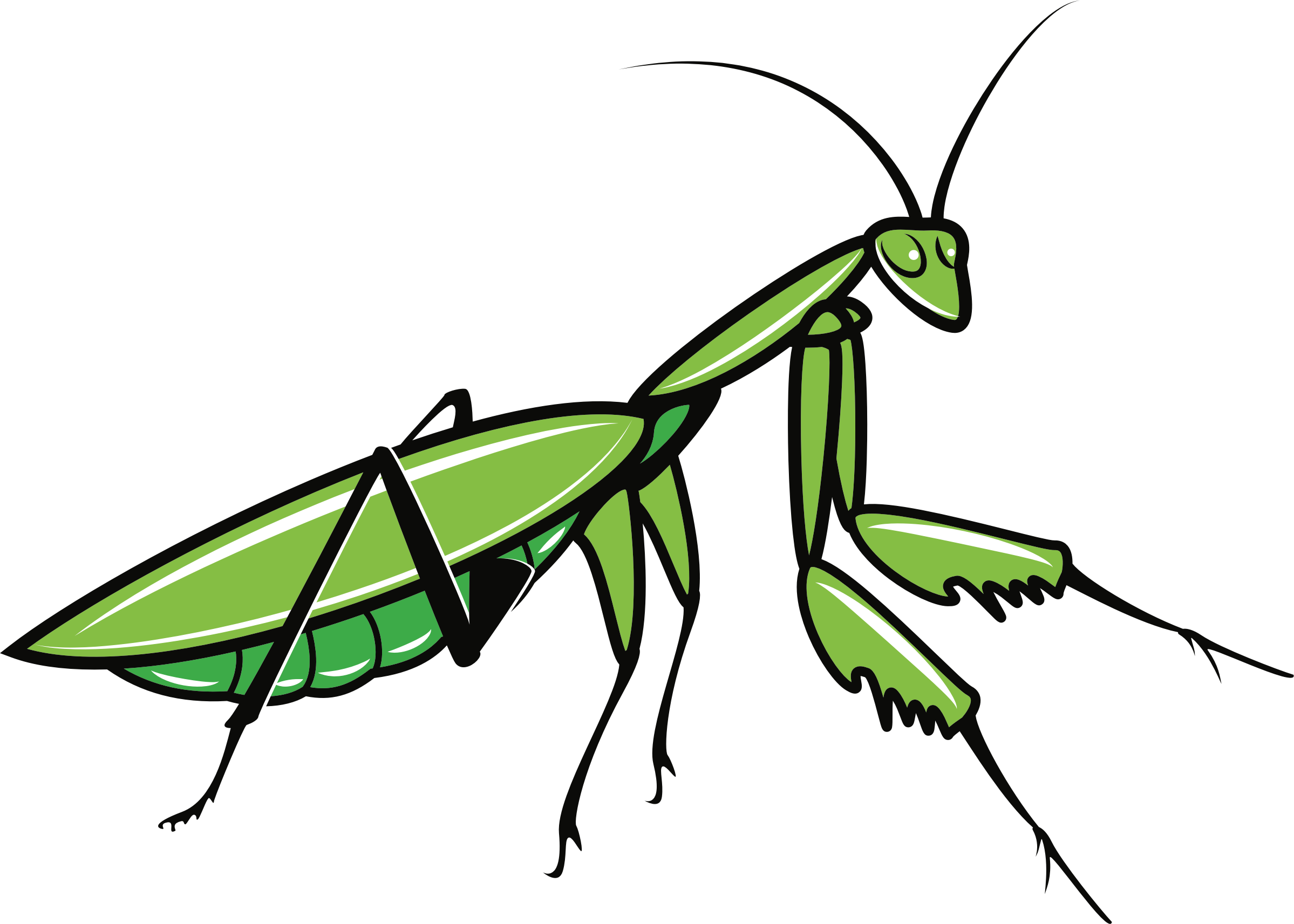 Big image png. Insects clipart praying mantis