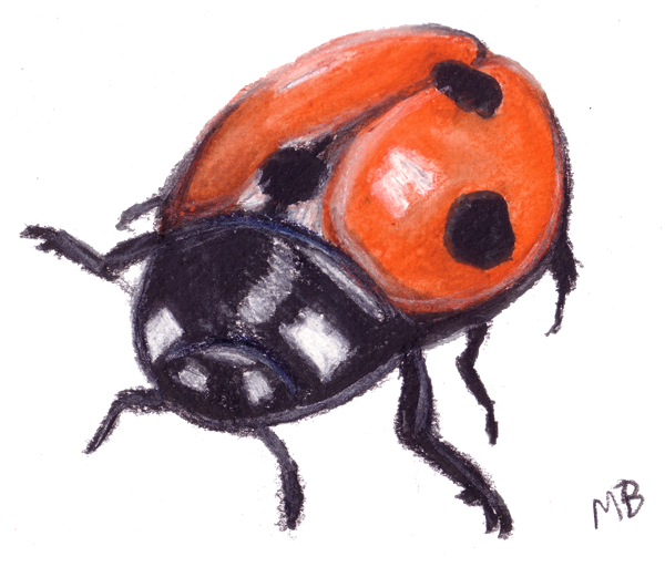 Ladybug clipart watercolor. Ladybird pencil drawing mariquitas