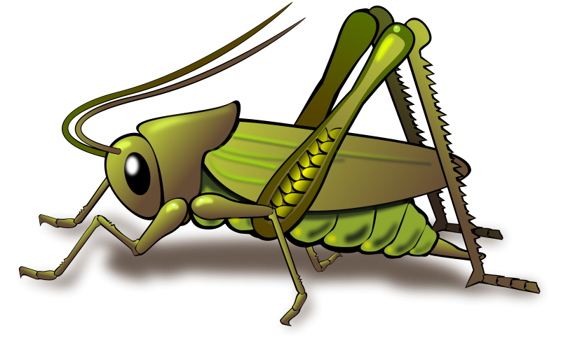 Insects clipart green insect. Detect termite crickets