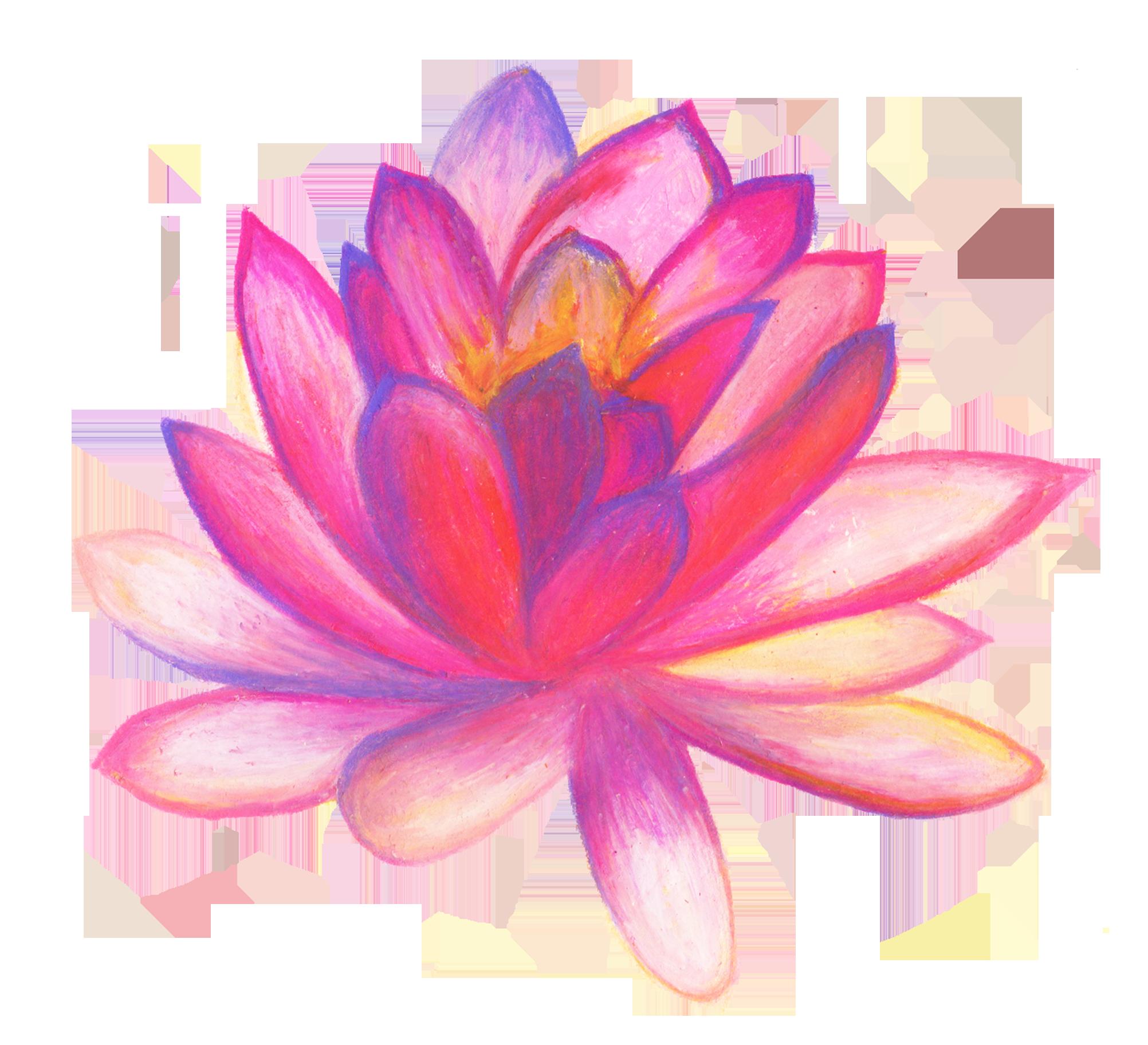lotus clipart hand drawn