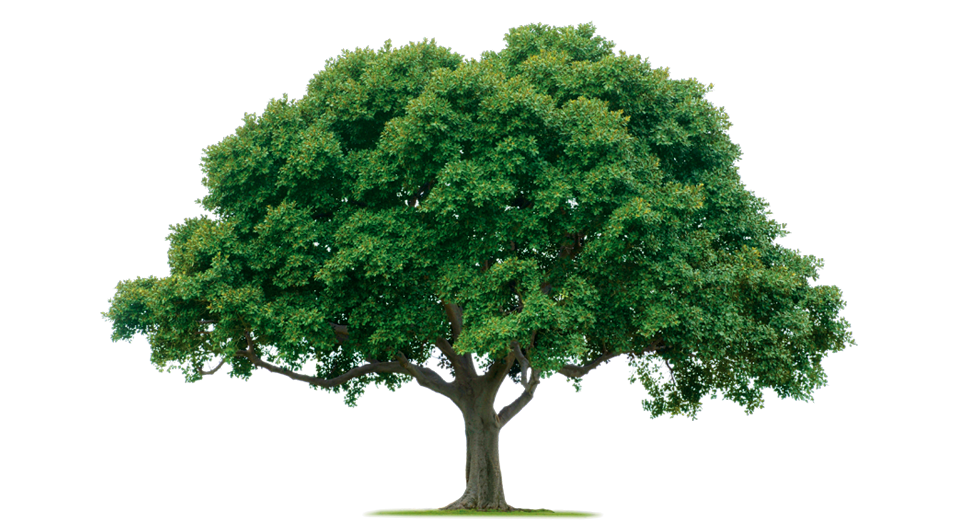 Of knowledge kmbeing. Green clipart mango tree