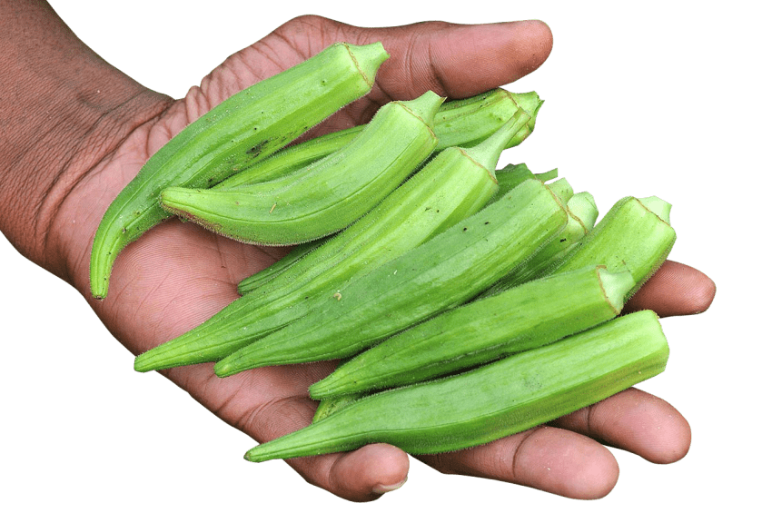 Green clipart okra. Hand with png free