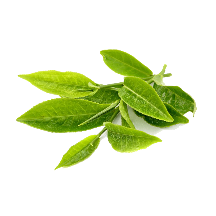 Green clipart transparent background. Tea free on