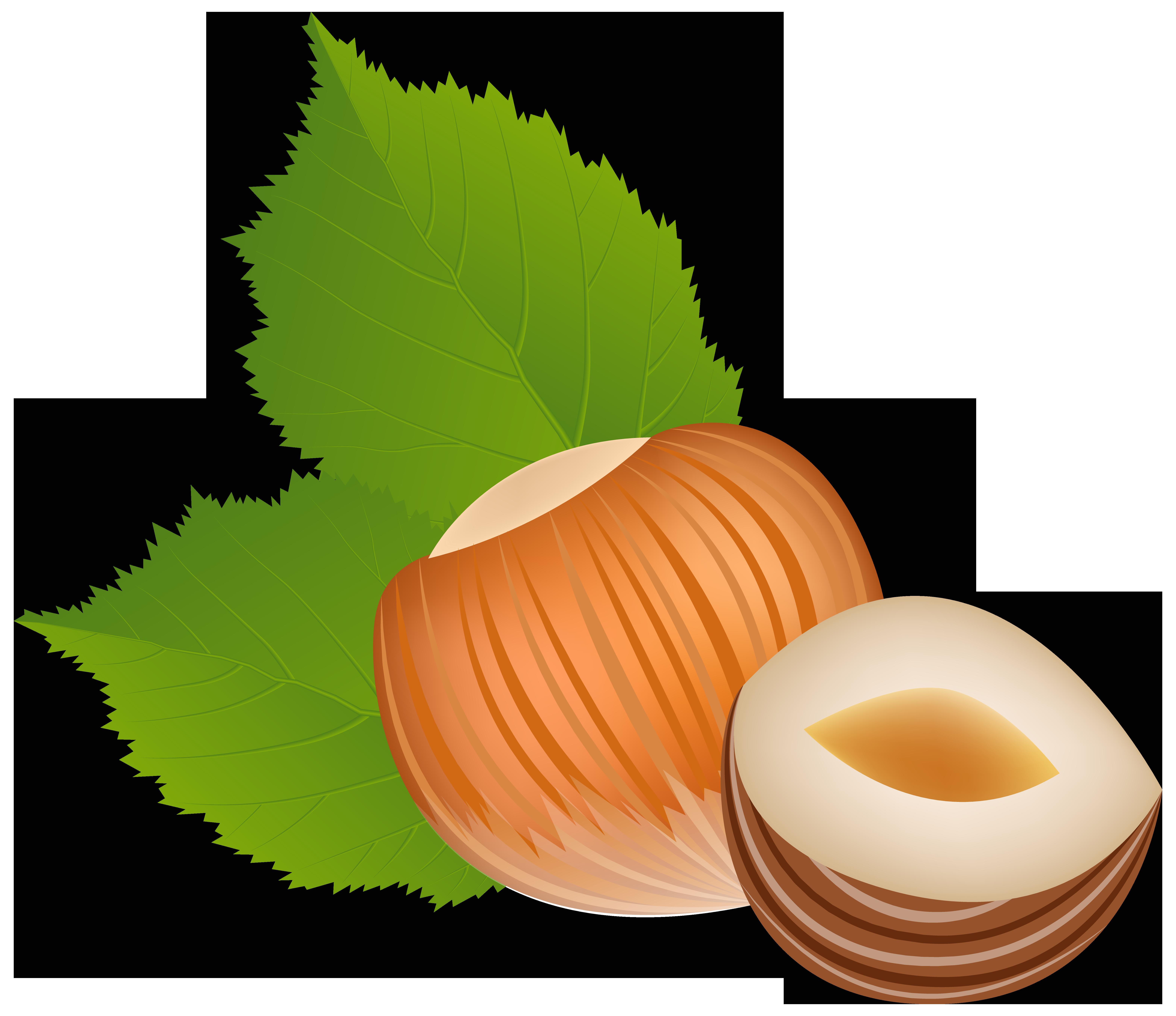Nut clipart clip art. Hazelnut transparent png image