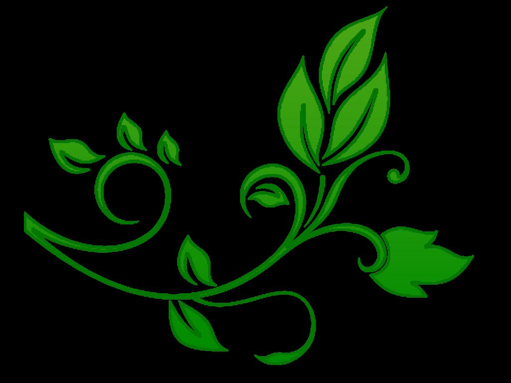 Green flower png. Floral file peoplepng com