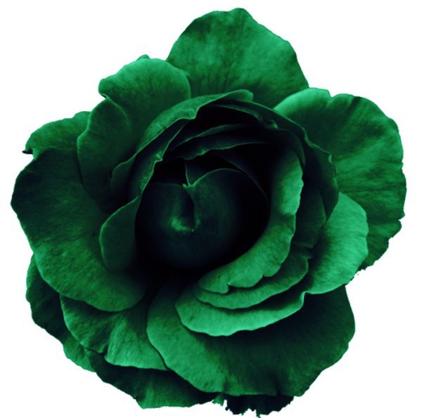 Green flower png.  for free download