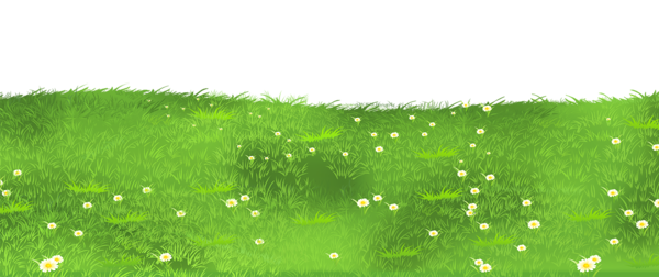 Ground with daisies png. Grass clipart landscape
