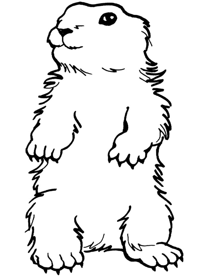 Free cartoon pictures download. Groundhog clipart color