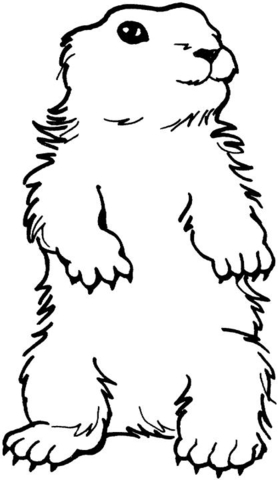 Groundhog clipart color. Coloring page free printable