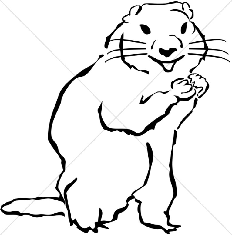 Wildlife . Groundhog clipart drawn