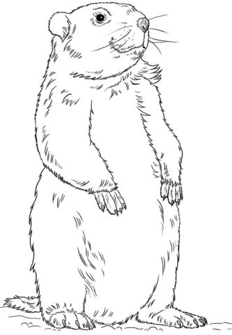 Groundhog clipart drawn. Image result for black