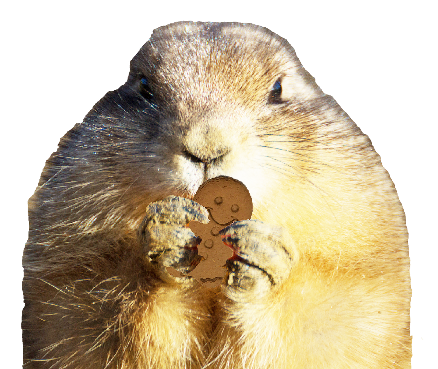 Groundhog clipart prairie animal. Tales from the crypt