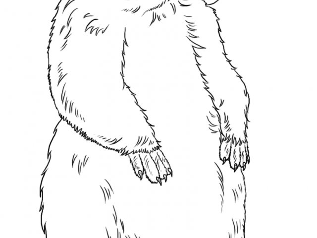 Free download clip art. Groundhog clipart realistic