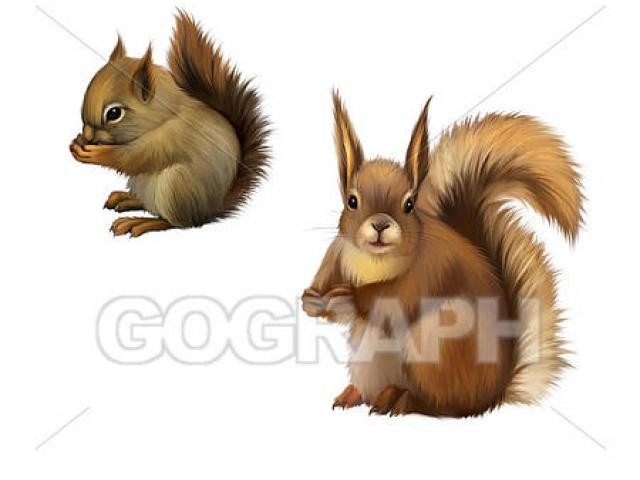 Free squirrel nut download. Groundhog clipart realistic