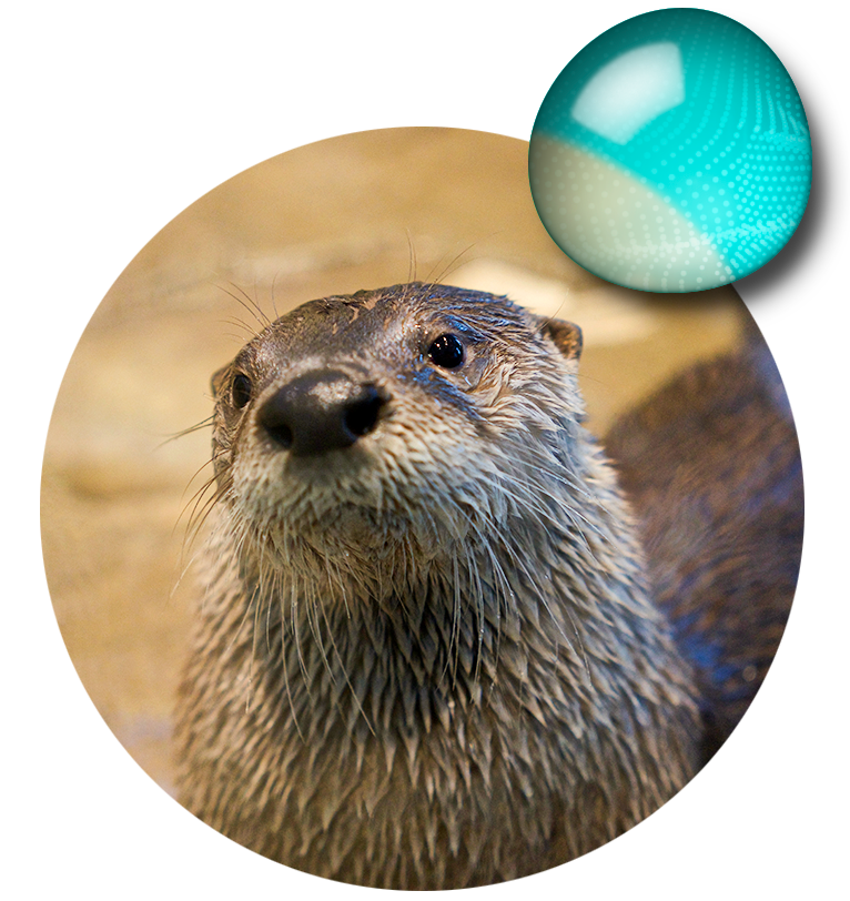 Explore the aquarium and. Groundhog clipart sea otter