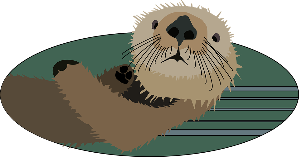 Animated pictures river otters. Groundhog clipart sea otter