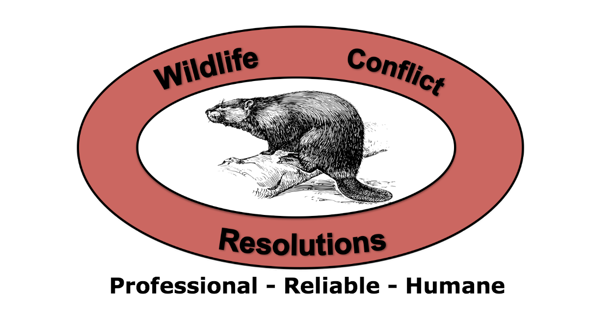 Groundhog clipart underground animal. Lake anna and fredericksburg